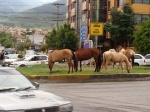 horses-in-the-city-02