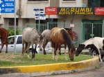 horses-in-the-city-03