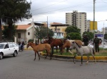 horses-in-the-city-04